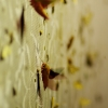 Sfinksų naktis | Fotografijos autorius : Deividas Makavičius | © Macrogamta.lt | Šis tinklapis priklauso bendruomenei kuri domisi makro fotografija ir fotografuoja gyvąjį makro pasaulį.