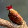 Paprastasis lazdynas - Corylus avellana, žiedas | Fotografijos autorius : Oskaras Venckus | © Macrogamta.lt | Šis tinklapis priklauso bendruomenei kuri domisi makro fotografija ir fotografuoja gyvąjį makro pasaulį.