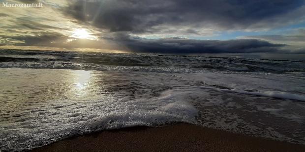 Baltijos jūra   Fotografijos autorius : Gintautas Steiblys   © Macrogamta.lt   Šis tinklapis priklauso bendruomenei kuri domisi makro fotografija ir fotografuoja gyvąjį makro pasaulį.