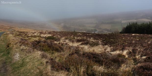 Sléibhte Chill Mhantáin (Wicklow Mountains) | Fotografijos autorius : Gintautas Steiblys | © Macrogamta.lt | Šis tinklapis priklauso bendruomenei kuri domisi makro fotografija ir fotografuoja gyvąjį makro pasaulį.