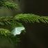 Blyškusis žaliasprindis (Jodis putata) | Fotografijos autorius : Vidas Brazauskas | © Macrogamta.lt | Šis tinklapis priklauso bendruomenei kuri domisi makro fotografija ir fotografuoja gyvąjį makro pasaulį.