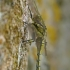 Paprastoji skėtė - Sympetrum vulgatum | Fotografijos autorius : Gintautas Steiblys | © Macrogamta.lt | Šis tinklapis priklauso bendruomenei kuri domisi makro fotografija ir fotografuoja gyvąjį makro pasaulį.