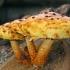 Auksaviršė skujagalvė - Pholiota aurivella | Fotografijos autorius : Gintautas Steiblys | © Macrogamta.lt | Šis tinklapis priklauso bendruomenei kuri domisi makro fotografija ir fotografuoja gyvąjį makro pasaulį.