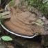 Plokščiasis blizgutis - Ganoderma applanatum | Fotografijos autorius : Kazimieras Martinaitis | © Macrogamta.lt | Šis tinklapis priklauso bendruomenei kuri domisi makro fotografija ir fotografuoja gyvąjį makro pasaulį.