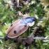 Keturtaškis maitvabalis - Dendroxena quadrimaculata | Fotografijos autorius : Vitalii Alekseev | © Macrogamta.lt | Šis tinklapis priklauso bendruomenei kuri domisi makro fotografija ir fotografuoja gyvąjį makro pasaulį.