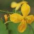Didžioji ugniažolė - Chelidonium majus | Fotografijos autorius : Gintautas Steiblys | © Macrogamta.lt | Šis tinklapis priklauso bendruomenei kuri domisi makro fotografija ir fotografuoja gyvąjį makro pasaulį.