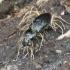 Entomophthorales | Fotografijos autorius : Giedrius Markevičius | © Macrogamta.lt | Šis tinklapis priklauso bendruomenei kuri domisi makro fotografija ir fotografuoja gyvąjį makro pasaulį.