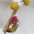 Europinis maumedis - Larix decidua | Fotografijos autorius : Zita Gasiūnaitė | © Macrogamta.lt | Šis tinklapis priklauso bendruomenei kuri domisi makro fotografija ir fotografuoja gyvąjį makro pasaulį.
