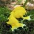 Geltonasis fuligas - Fuligo septica  | Fotografijos autorius : Agnė Kulpytė | © Macrogamta.lt | Šis tinklapis priklauso bendruomenei kuri domisi makro fotografija ir fotografuoja gyvąjį makro pasaulį.