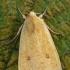 Geltonasis vėlyvis - Xanthia icteritia   Fotografijos autorius : Gintautas Steiblys   © Macrogamta.lt   Šis tinklapis priklauso bendruomenei kuri domisi makro fotografija ir fotografuoja gyvąjį makro pasaulį.