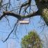 Gojaus miškas 2 | Fotografijos autorius : Romas Ferenca | © Macrogamta.lt | Šis tinklapis priklauso bendruomenei kuri domisi makro fotografija ir fotografuoja gyvąjį makro pasaulį.