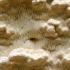Beformė ragapintė - Skeletocutis amorpha | Fotografijos autorius : Ramunė Vakarė | © Macrogamta.lt | Šis tinklapis priklauso bendruomenei kuri domisi makro fotografija ir fotografuoja gyvąjį makro pasaulį.