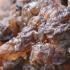 Drebutis - Exidia cartilaginea   Fotografijos autorius : Gintautas Steiblys   © Macrogamta.lt   Šis tinklapis priklauso bendruomenei kuri domisi makro fotografija ir fotografuoja gyvąjį makro pasaulį.