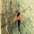 Ilgakojis uodas - Tanyptera atrata | Fotografijos autorius : Žygimantas Obelevičius | © Macrogamta.lt | Šis tinklapis priklauso bendruomenei kuri domisi makro fotografija ir fotografuoja gyvąjį makro pasaulį.