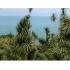 Juodoji jūra nuo Batumio bot. sodo 2 | Fotografijos autorius : Gintautas Steiblys | © Macrogamta.lt | Šis tinklapis priklauso bendruomenei kuri domisi makro fotografija ir fotografuoja gyvąjį makro pasaulį.