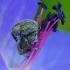 Katilėlinis straubliukas - Cleopomiarus graminis | Fotografijos autorius : Romas Ferenca | © Macrogamta.lt | Šis tinklapis priklauso bendruomenei kuri domisi makro fotografija ir fotografuoja gyvąjį makro pasaulį.