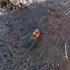 Melsvasparnis smulkiaspragšis - Cardiophorus ruficollis | Fotografijos autorius : Vitalii Alekseev | © Macrogamta.lt | Šis tinklapis priklauso bendruomenei kuri domisi makro fotografija ir fotografuoja gyvąjį makro pasaulį.