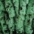 Miltinuotė - Lepraria sp. | Fotografijos autorius : Aleksandras Stabrauskas | © Macrogamta.lt | Šis tinklapis priklauso bendruomenei kuri domisi makro fotografija ir fotografuoja gyvąjį makro pasaulį.