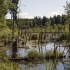 Misiškių ežeras   Fotografijos autorius : Kazimieras Martinaitis   © Macrogamta.lt   Šis tinklapis priklauso bendruomenei kuri domisi makro fotografija ir fotografuoja gyvąjį makro pasaulį.