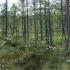 Paduobio miško aukštapelkė | Fotografijos autorius : Gintautas Steiblys | © Macrogamta.lt | Šis tinklapis priklauso bendruomenei kuri domisi makro fotografija ir fotografuoja gyvąjį makro pasaulį.
