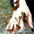 Paprastoji šaškytė - Melitaea athalia | Fotografijos autorius : Žygimantas Obelevičius | © Macrogamta.lt | Šis tinklapis priklauso bendruomenei kuri domisi makro fotografija ir fotografuoja gyvąjį makro pasaulį.