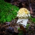 Paprastoji musmirė | Fly agaric | Amanita muscaria | Fotografijos autorius : Darius Baužys | © Macrogamta.lt | Šis tinklapis priklauso bendruomenei kuri domisi makro fotografija ir fotografuoja gyvąjį makro pasaulį.