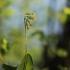 Pavasarinė raktažolė – Primula veris   Fotografijos autorius : Agnė Našlėnienė   © Macrogamta.lt   Šis tinklapis priklauso bendruomenei kuri domisi makro fotografija ir fotografuoja gyvąjį makro pasaulį.