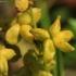 Pelkinė liūnsargė - Scheuchzeria palustris | Fotografijos autorius : Ramunė Vakarė | © Macrogamta.lt | Šis tinklapis priklauso bendruomenei kuri domisi makro fotografija ir fotografuoja gyvąjį makro pasaulį.