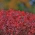 Raudonžiedis snaputis - Geranium sanguineum | Fotografijos autorius : Kęstutis Obelevičius | © Macrogamta.lt | Šis tinklapis priklauso bendruomenei kuri domisi makro fotografija ir fotografuoja gyvąjį makro pasaulį.