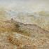 Smėlinė krevetė - Crangon crangon   Fotografijos autorius : Gintautas Steiblys   © Macrogamta.lt   Šis tinklapis priklauso bendruomenei kuri domisi makro fotografija ir fotografuoja gyvąjį makro pasaulį.