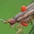 Sraigžudė - Limnia unguicornis su erkėm   Fotografijos autorius : Vidas Brazauskas   © Macrogamta.lt   Šis tinklapis priklauso bendruomenei kuri domisi makro fotografija ir fotografuoja gyvąjį makro pasaulį.