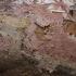 Spurguotasis laibadyglis - Steccherinum fimbriatum | Fotografijos autorius : Vytautas Gluoksnis | © Macrogamta.lt | Šis tinklapis priklauso bendruomenei kuri domisi makro fotografija ir fotografuoja gyvąjį makro pasaulį.