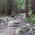 Takas mišku link Giewont'o viršūkalnės. | Fotografijos autorius : Vitalijus Bačianskas | © Macrogamta.lt | Šis tinklapis priklauso bendruomenei kuri domisi makro fotografija ir fotografuoja gyvąjį makro pasaulį.