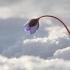 Triskiautė žibuoklė - Hepatica nobilis   Fotografijos autorius : Agnė Našlėnienė   © Macrogamta.lt   Šis tinklapis priklauso bendruomenei kuri domisi makro fotografija ir fotografuoja gyvąjį makro pasaulį.