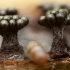 Vapsvinis garbanūnas - Metatrichia vesparium | Fotografijos autorius : Žilvinas Pūtys | © Macrogamta.lt | Šis tinklapis priklauso bendruomenei kuri domisi makro fotografija ir fotografuoja gyvąjį makro pasaulį.