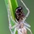 Voras | Fotografijos autorius : Darius Baužys | © Macrogamta.lt | Šis tinklapis priklauso bendruomenei kuri domisi makro fotografija ir fotografuoja gyvąjį makro pasaulį.