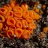 Bisonektrija - Byssonectria sp. | Fotografijos autorius : Zita Gasiūnaitė | © Macrogamta.lt | Šis tinklapis priklauso bendruomenei kuri domisi makro fotografija ir fotografuoja gyvąjį makro pasaulį.