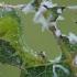 Pjūklelio lerva | Fotografijos autorius : Gintautas Steiblys | © Macrogamta.lt | Šis tinklapis priklauso bendruomenei kuri domisi makro fotografija ir fotografuoja gyvąjį makro pasaulį.