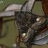 Avietinis pelėdgalvis - Euplexia lucipara   Fotografijos autorius : Gintautas Steiblys   © Macrogamta.lt   Šis tinklapis priklauso bendruomenei kuri domisi makro fotografija ir fotografuoja gyvąjį makro pasaulį.