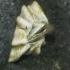 Jūrų gilė - Semibalanus balanoides   Fotografijos autorius : Gintautas Steiblys   © Macrogamta.lt   Šis tinklapis priklauso bendruomenei kuri domisi makro fotografija ir fotografuoja gyvąjį makro pasaulį.