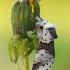 Beržinis dviuodegis - Furcula bicuspis | Fotografijos autorius : Arūnas Eismantas | © Macrogamta.lt | Šis tinklapis priklauso bendruomenei kuri domisi makro fotografija ir fotografuoja gyvąjį makro pasaulį.