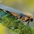 Lithosia quadra - Keturtaškė kerpytė   Fotografijos autorius : Arūnas Eismantas   © Macrogamta.lt   Šis tinklapis priklauso bendruomenei kuri domisi makro fotografija ir fotografuoja gyvąjį makro pasaulį.