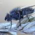Leucophora obtusa - Žiedenė   Fotografijos autorius : Arūnas Eismantas   © Macrogamta.lt   Šis tinklapis priklauso bendruomenei kuri domisi makro fotografija ir fotografuoja gyvąjį makro pasaulį.