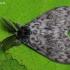 Vienuolis verpikas - Lymantria monacha  | Fotografijos autorius : Arūnas Eismantas | © Macrogamta.lt | Šis tinklapis priklauso bendruomenei kuri domisi makro fotografija ir fotografuoja gyvąjį makro pasaulį.