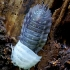 Paprastasis vėdarėlis - Oniscus asellus | Fotografijos autorius : Romas Ferenca | © Macrogamta.lt | Šis tinklapis priklauso bendruomenei kuri domisi makro fotografija ir fotografuoja gyvąjį makro pasaulį.