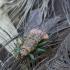 Musė siurbikė - Ornithomya avicularia   Fotografijos autorius : Romas Ferenca   © Macrogamta.lt   Šis tinklapis priklauso bendruomenei kuri domisi makro fotografija ir fotografuoja gyvąjį makro pasaulį.