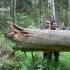 Stora buvo eglė, stora........   Fotografijos autorius : Nomeda Vėlavičienė   © Macrogamta.lt   Šis tinklapis priklauso bendruomenei kuri domisi makro fotografija ir fotografuoja gyvąjį makro pasaulį.