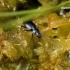 Agonum sp. - Žvitražygis   Fotografijos autorius : Gediminas Gražulevičius   © Macrogamta.lt   Šis tinklapis priklauso bendruomenei kuri domisi makro fotografija ir fotografuoja gyvąjį makro pasaulį.