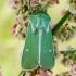 Žaliasis naktinukas - Calamia tridens   Fotografijos autorius : Oskaras Venckus   © Macrogamta.lt   Šis tinklapis priklauso bendruomenei kuri domisi makro fotografija ir fotografuoja gyvąjį makro pasaulį.