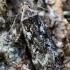 Beržinis anakampsis - Anacampsis blattariella | Fotografijos autorius : Oskaras Venckus | © Macrogamta.lt | Šis tinklapis priklauso bendruomenei kuri domisi makro fotografija ir fotografuoja gyvąjį makro pasaulį.